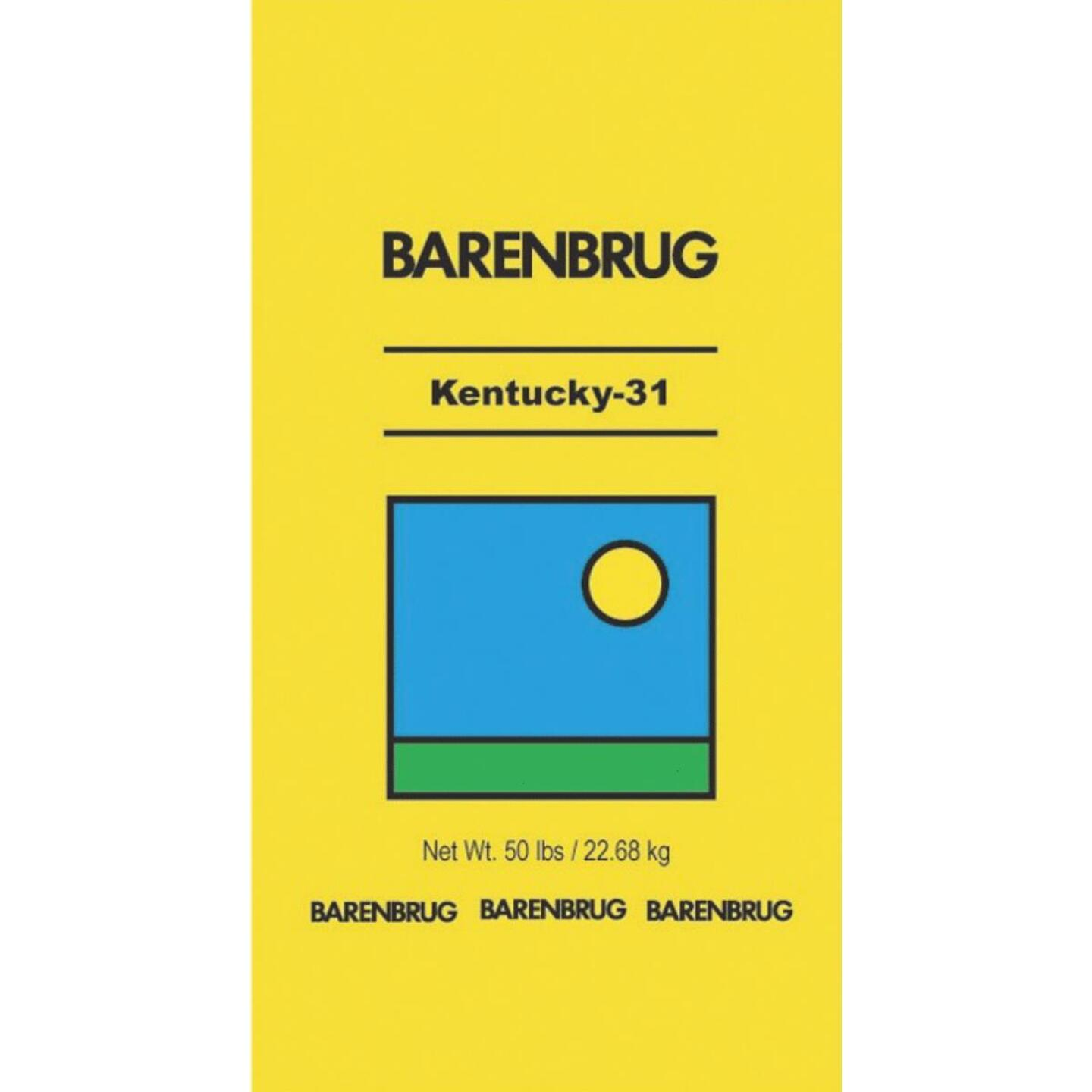 Barenbrug 50 Lb. 10,000 Sq. Ft. Coverage 50% Fescue/50% Coating Material Grass Seed Image 1